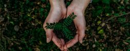 Hands; plant; eco-friendly; Noah buscher x8 Z Stuk S2 PM unsplash